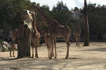 גן החיות של ליסבון - Lisbon's zoo